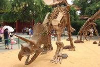 High Durability Realistic Dinosaur Skeleton Models Fiberglass / Gypsum Made