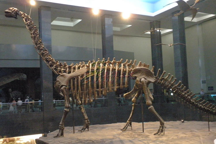 Weather Resistant Simulation Dinosaur Fossil Model For Museum Exhibition
