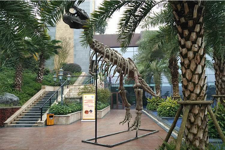 Vivid Complete Dinosaur Fossil Skeleton Bones For Science And Technology Museum